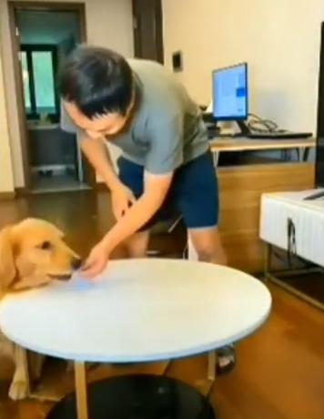 출처: https://www.ladbible.com/news/animals-dog-tricks-owner-into-thinking-its-not-eaten-a-treat-20201115