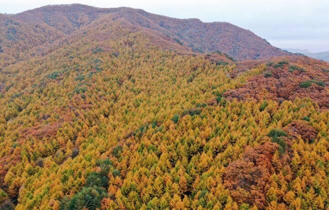 출처: 산림청
