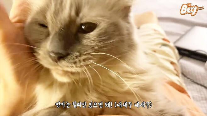출처: 베니 패밀리 유튜브 채널