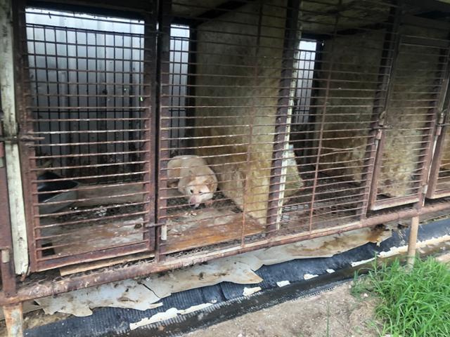 개 도살장 옆 뜬장에서 길러지던 개들은 결국 다른 개농장으로 팔려갔다. 동물구조119 제공