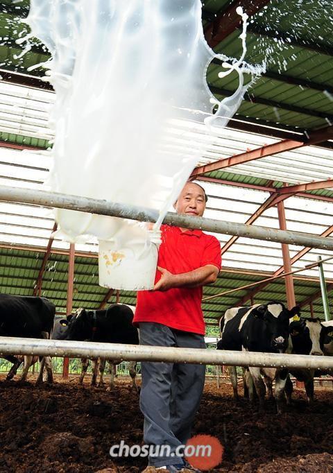 """앞서 지난 4월 충남 연기군 서면 국촌리에 있는 한 젖소 농가에서 농장주 유병찬씨가 오전에 짠 원유가 든 플라스틱 통을 비우고 있다. 낙농 농가들은 """"정부와 유업체가 원유값 인상을 받아들이지 않는다""""며 3일 집유(集乳) 거부에 들어갔다./조선DB"""