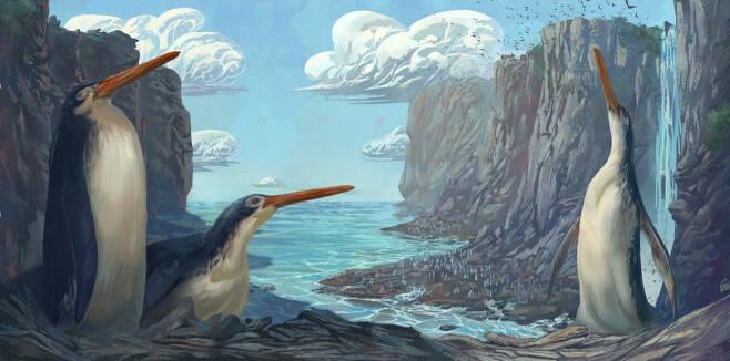 고대 펭귄 카이루쿠 와에와에로아의 상상도.(사진=시몬 조바나르디/뉴질랜드 메시대)