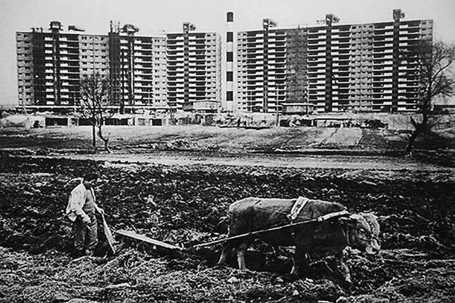 1978년 압구정 현대아파트 앞에서 농부가 소로 밭갈이를 하는 모습. 농부가 밭을 갈던 곳은 현재 압구정초등학교가 자리하고 있다. /강남구청 아카이브강남