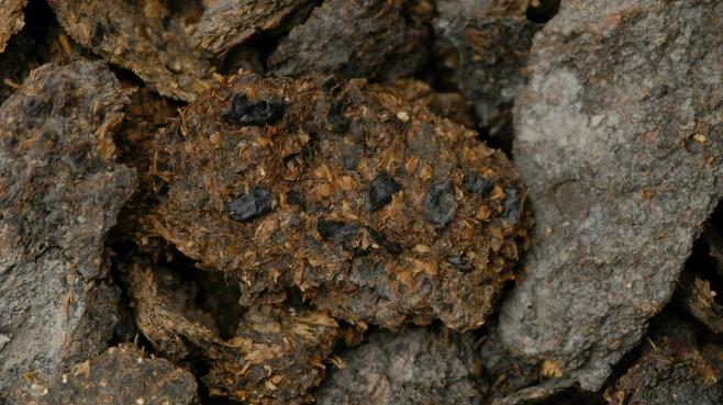 콩, 기장, 보리가 선명하게 보이는 2700년 전 할슈타트 소금광산 광부의 배설물 화석. AFP 연합뉴스