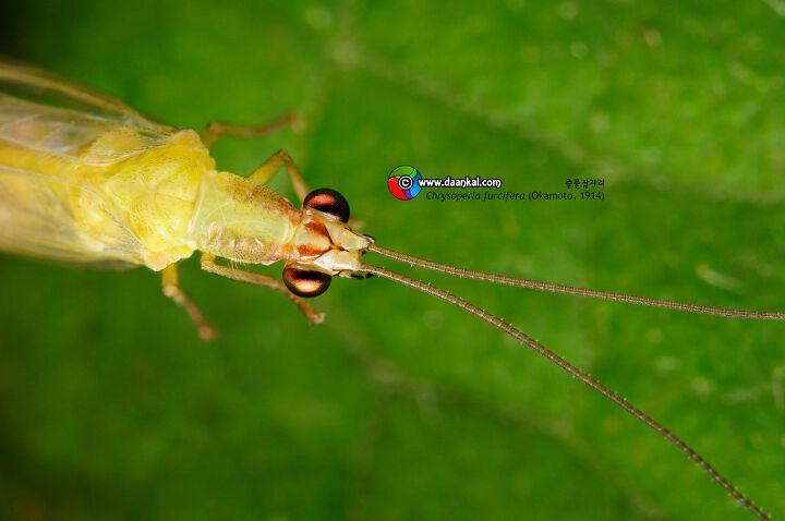 Bộ sưu tập côn trùng 2 - Page 25 ?scode=mtistory&fname=http%3A%2F%2Fcfile30.uf.tistory
