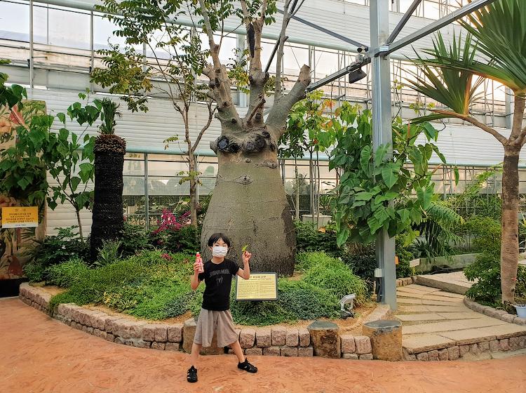 화성의 작은 식물원 바오밥식물원베이커리&카페 다녀온 후기