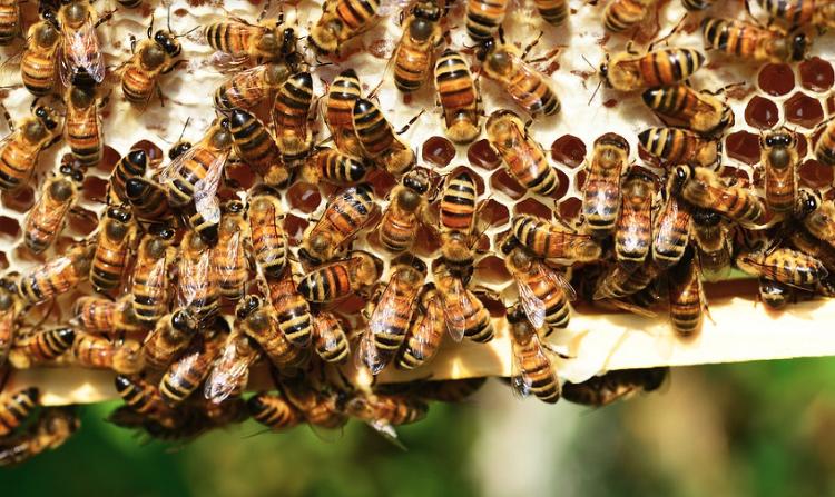 유아에게 꿀 먹이면 안되는 이유