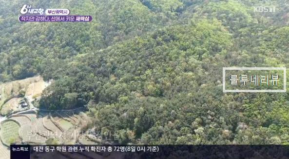 6시내고향 부산 새싹삼 파는 곳 택배 배송 문의 연락처 위치 어디? (텃밭 분양 가능)