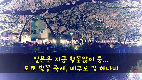 일본은 지금 벚꽃앓이 중... 도쿄 벚꽃 축제, 메구로 강 하나미