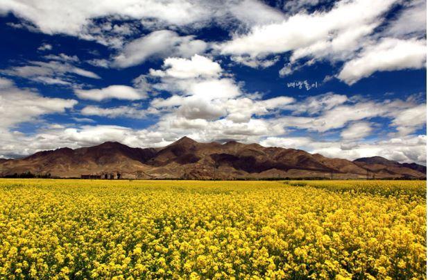 여행 cover image