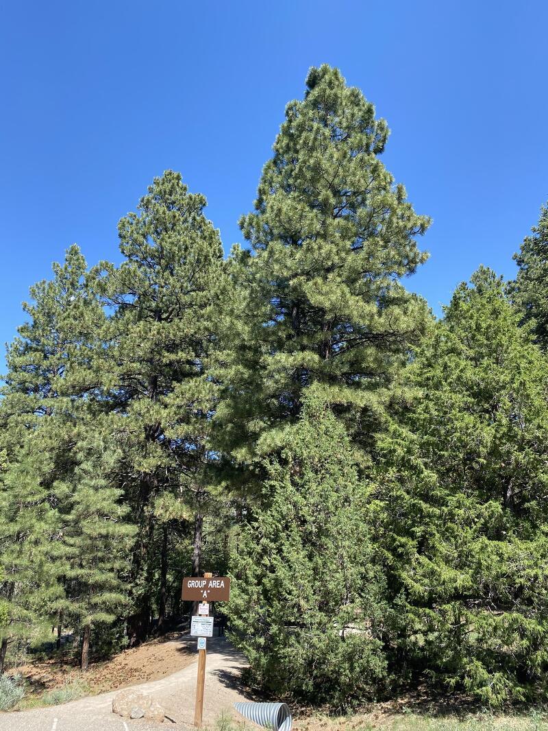 미국 여행 - 유타 파인 밸리 (Pine Valley) 캠프그라운드 이용 후기