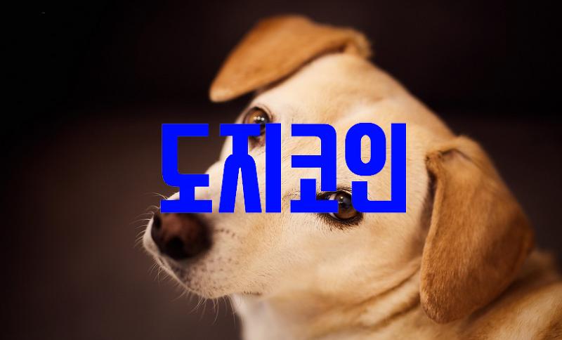 도지코인 전망, 호재, 시세, 거래소 및 DOGE 기본정보 (대박상세)