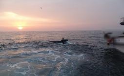 군산 해상 추돌후 통신두절 어선 선원 2명 무사 구조