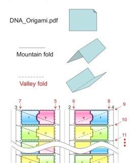 Origami DNA | STEM | 320x272