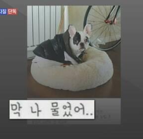 [단독]최시원도 같은 개에 물려 경찰 홍보단 공연 차질