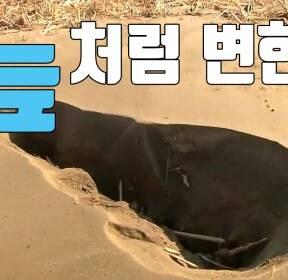 """[자막뉴스] """"땅이 늪처럼""""..포항 지진으로 확인된 첫 '액상화 현상'"""