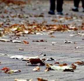 [포토친구] 낙엽 길을 걸으며