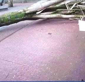 [현장영상] 사람 날아가고 나무기둥 뽑히고..유럽, 폭풍에 혼비백산