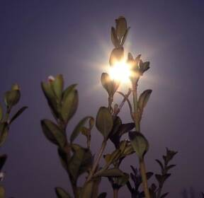 [포토에세이] 봄 햇살 / 이정우