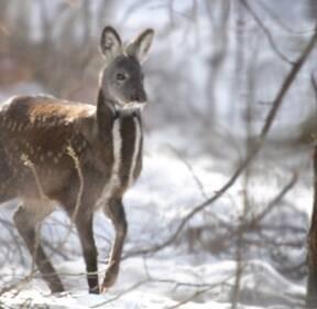 소똥구리·꽃사슴 돌아온다..멸종위기종 복원 박차