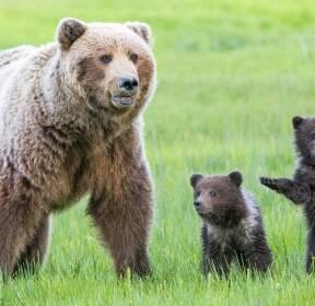 [애니멀 픽!] 엄마랑 '봄 마실' 나온 아기 곰들