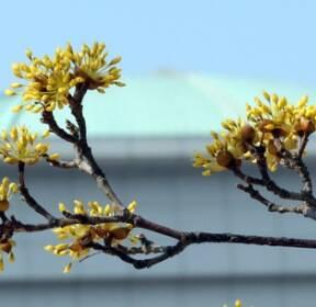 [서소문사진관]국회에도 봄은 온다.