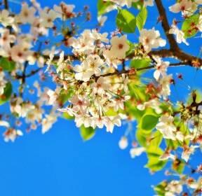 [포토친구] 푸른 봄 하늘 아래