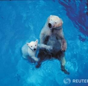 """""""엄마, 내일도 물에서 놀아요"""""""