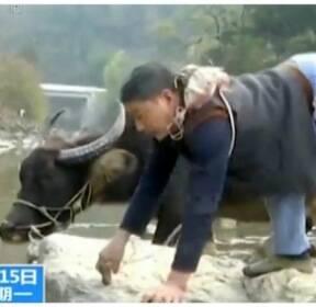 [김동환의 월드줌人] 다리 하나로 산 오르내리며..보조금 마다하고 소 키우는 남성