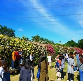 [포토친구] 울산대공원 장미축제