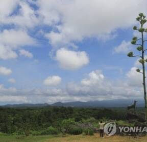 [카메라뉴스] 꽃 피우기 직전의 용설란