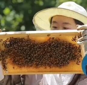 <꿈을 job아라> 꿀벌과 사람의 공존을 꿈꾸는 도시양봉가