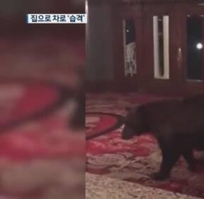 """""""야생 곰·사자에 당했다""""..주택가 내려와 습격 '공포'"""
