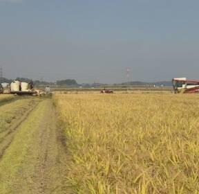쌀 생산량 2.5% 감소..수확기에도 쌀값 상승