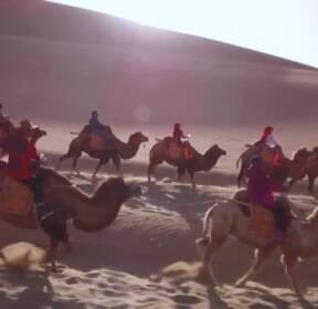 중국 고비사막 '낙타 관광' 인기