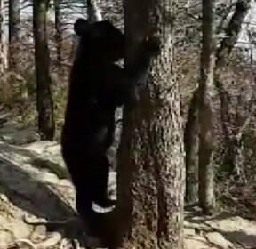[단독] 지리산 등산로에 또 나타난 그 반달곰!