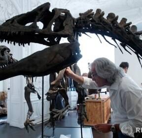 공룡 골격 복원하는 전문가의 손길