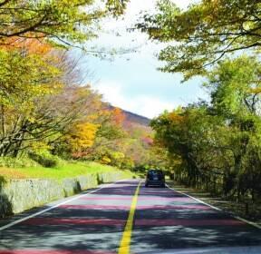 '1100도로'에서 만난 제주의 '가을과 겨울 사이'