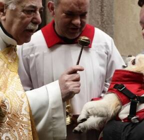 [서소문사진관] 고양이, 강아지, 고슴도치가 성당으로 몰려든 이유는..