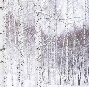 [포토 에세이]雪國