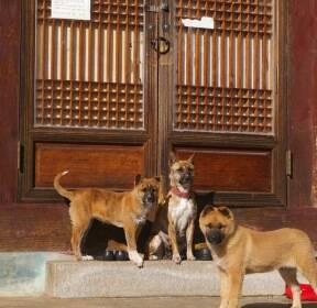 [포토친구] 山寺를 지키는 犬公들