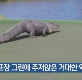 [지금 세계는] 골프장 그린에 주저앉은 거대한 악어