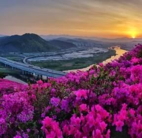 [포토친구] 대구 와룡산 영산홍 일출 풍경