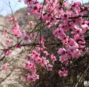 [포토친구] 정선 점재마을의 봄 풍경