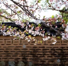 [포토친구] 벚꽃 산책로에서