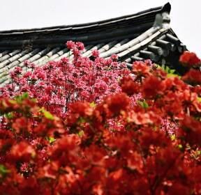 [포토친구] 울긋불긋 꽃동산