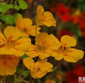 [포토친구] 꽃밭에서