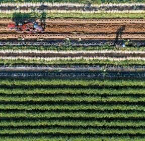 푸른 밭, 흰 무, 농부의 땀.. 한 폭의 그림이 완성됐다