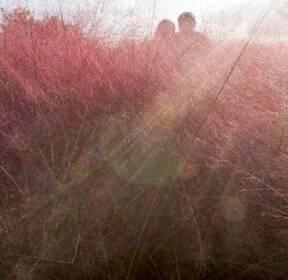 [포토친구] 하늘공원 핑크뮬리