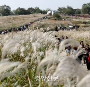 10월20일 서울시내 '억새의 장관'이 펼쳐졌네 [경향이 찍은 오늘]